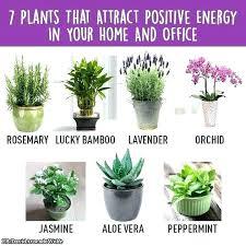 plante verte bureau with dcoration bureau plante de bureau plante verte pour