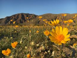 map where to see southern california u0027s super bloom this weekend