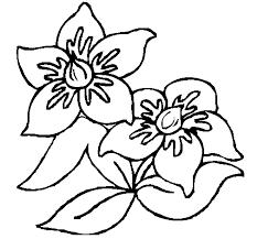 dibujo flores 3 colorear dibujos net