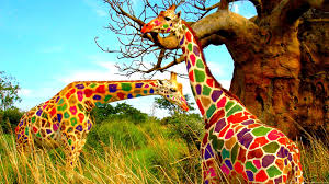 funny colorful giraffes in the jungle hd animal wallpaper