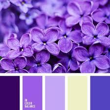 17 best purple and blue images on color palettes color
