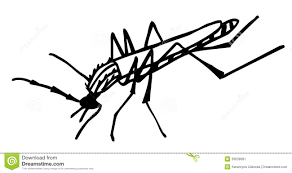 mosquito clipart gnat pencil and in color mosquito clipart gnat