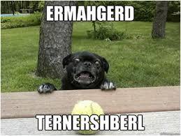 Meme Dogs - meme alert dogs comediva