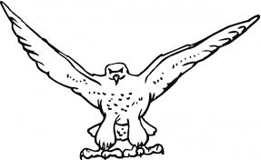 falcon printable coloring pages peregrine falcon bird coloring