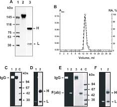 catalytic antibodies in norm and systemic lupus erythematosus