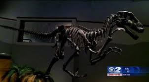 125 million year utah dinosaur fossil delivered to museum kutv