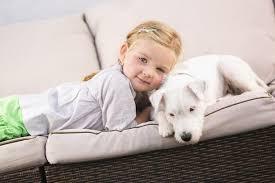 odeur d urine de sur canapé comment faire disparaître l odeur d urine animale sur un divan