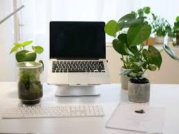 plantes pour bureau mettez vous au vert en adoptant un plante de bureau skywork