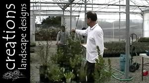 california native plant garden design 30 california native plants part 1 tall growing natives youtube