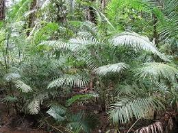 Tropical Rainforest Plant List - trood tropical rainforest plants