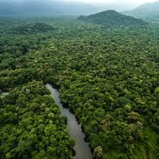 amazon basin introduction to the amazon rainforest usa today