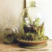 glass plant terrarium 20 ideas for home decorating with glass