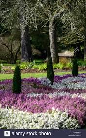 erica carnea heather white flower garden plant winter spring low