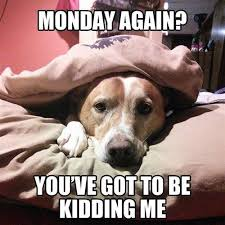 Funny Monday Meme - monday again you ve got to be kidding me animals pinterest