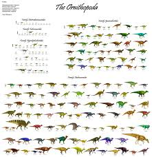 5 meters to feet the ornithopoda every ornithopod dinosaur discovered as of 01 13