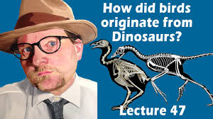 how did birds originate from dinosaurs youtube