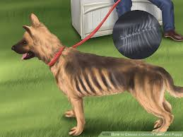 belgian shepherd how to train how to choose a german shepherd puppy with pictures wikihow