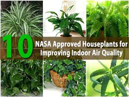 indoor plants that don t need sunlight coolest indoor plants good house that dont need sunlight low light