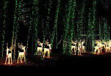 turtle back zoo lights riverbanks zoo christmas lights christmas decor inspirations