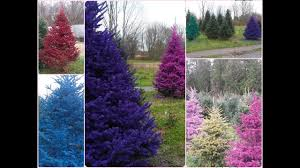 put a color in your with real colored trees