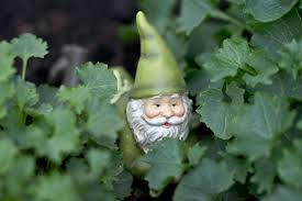 garden gnome in campanula by janszoon on deviantart