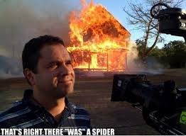 Meme Spider - how to deal with a spider kill it with fire know your meme
