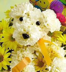 Flower Alt Code - judy u0027s village flowers foxborough ma florist