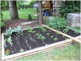 backyards splendid backyard veggie garden backyard vegetable