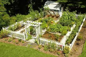 very beautiful and decorative vegetable garden at home backyard