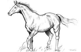 photos horse sketch art drawing art gallery