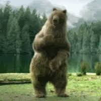 Dancing Bear Meme - dancing bear gif 15 gif images download