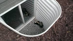 How Do You Get Rid Of Skunks In Your Backyard Skunks Under Home