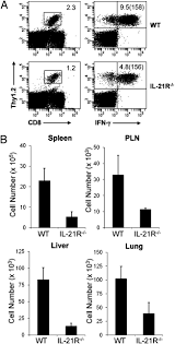 intrinsic il 21 signaling is critical for cd8 t cell survival and