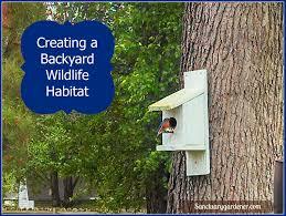 creating a backyard wildlife habitat sanctuary gardener
