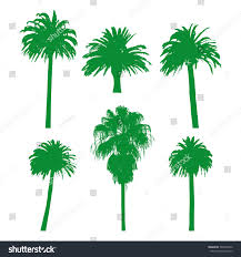 set palm tree silhouettes on white stock vector 569506342