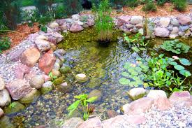 Container Water Garden Ideas Water Front Garden Ideas 20 Extraordinary Water Garden Ideas
