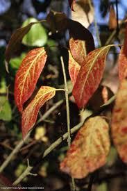 texas native plants database texas native plants database