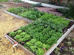 back to eden gardening home facebook