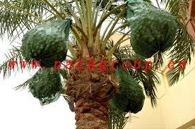 date palm tree bags 80 100cm buy date tree bag date tree