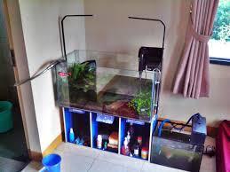 membuat aquascape bening perawatan aquascape jurnal aquascape