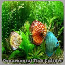 ornamental fish culture 1 0 apk androidappsapk co