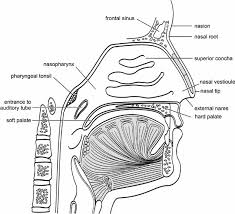 Pictures Of The Anatomy Of The Human Body Elements Of Morphology Human Malformation Terminology