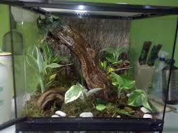 gallery of aquariums terrariums at habitats