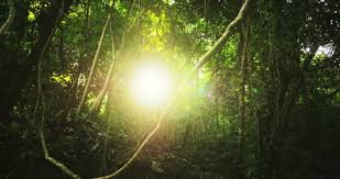jungle free video clips 126 free downloads