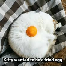 Egg Meme - kitty wanted to be a fried egg kitties meme on me me