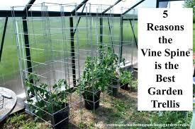 Vertical Garden Trellis - 5 reasons the vine spine is the best garden trellis