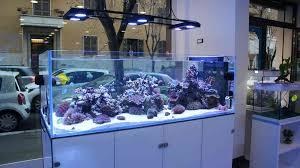 vasche acquario h2o acquari roma offerta vasche su misura acquaportal forum