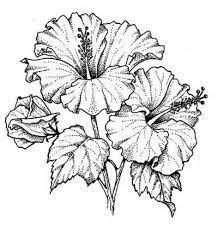 best 25 flower drawings ideas on pinterest flower sketches