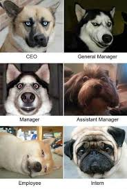 Dog Funny Meme - 21 funny dog memes