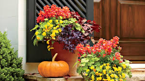 plant a vibrant fall container southern living